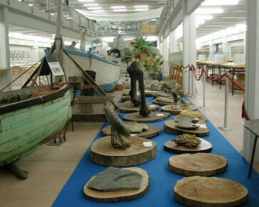 Shell museum - display